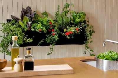 A kitchen garden is an important part of the wellness kitchen